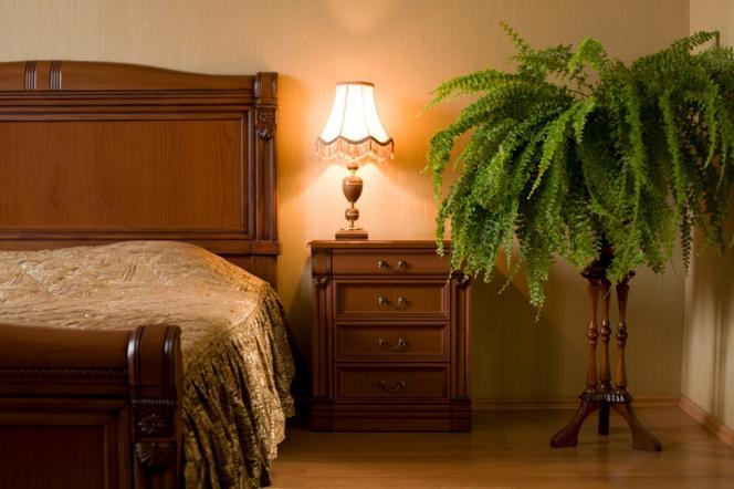 Zz Plant Bedroom