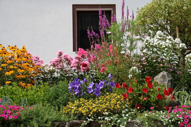 Ogrodki Kwiatowe Przy Domu Kwiaty Na Rabaty Ogrodowe Przed Domem Murator Pl