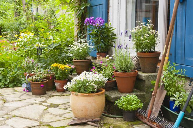 Uprawa Roślin Wieloletnich W Pojemnikach Na Balkonach I