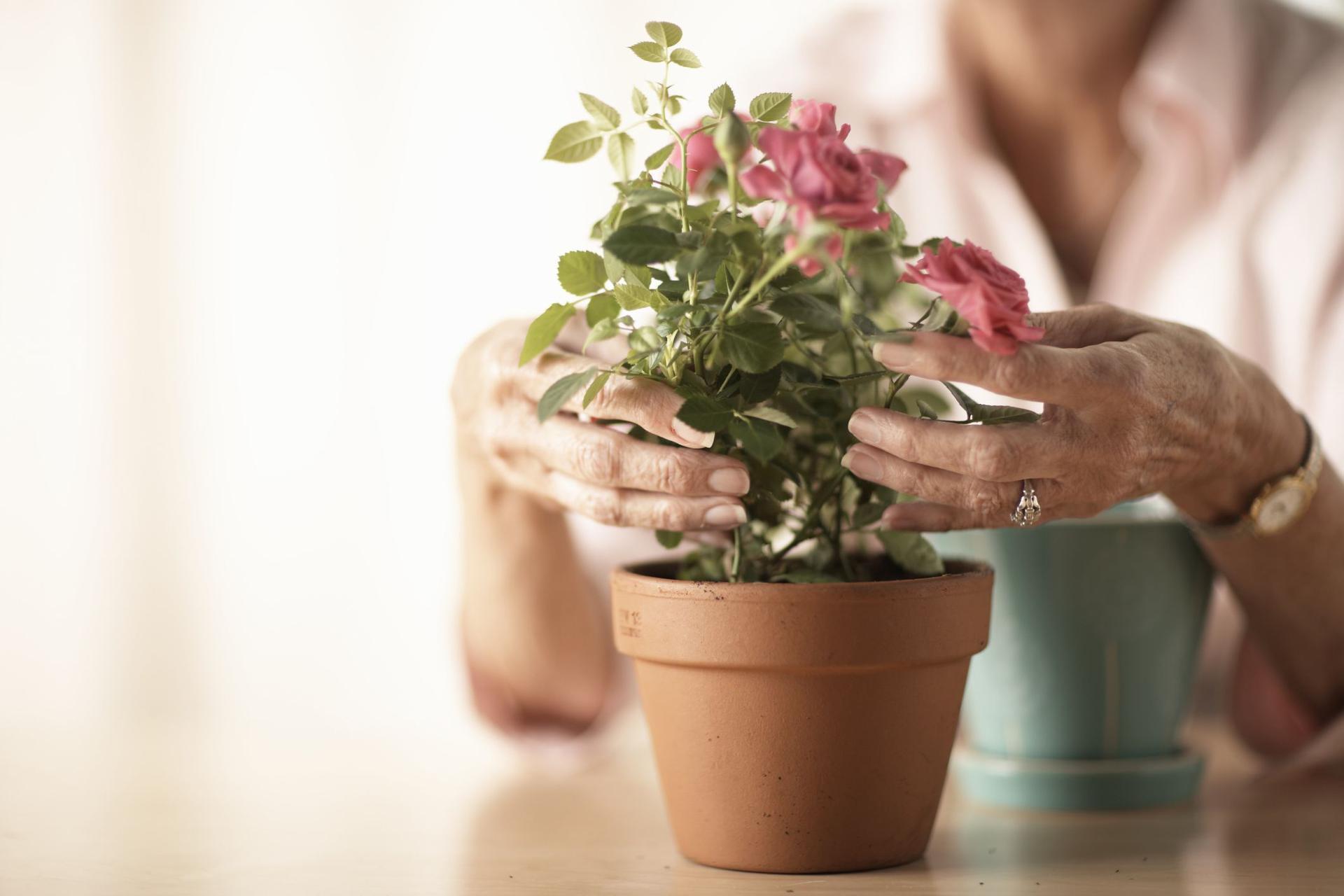 Kwiaty Doniczkowe Maja Pozytywny Wplyw Na Zdrowie Poradnikzdrowie Pl