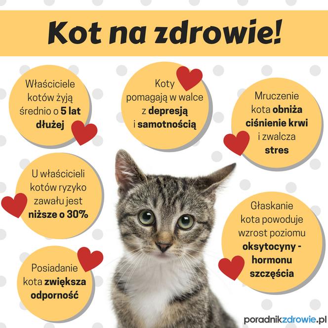 Kot Kochany Indywidualista Co Warto Wiedzieć O Kotach
