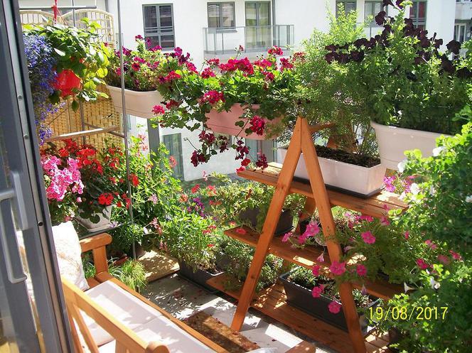 Kwiaty Na Sloneczny Balkon Wybieramy Kwiaty Na Balkon Poludniowy Urzadzamy Pl