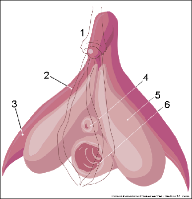 kobiecy orgazm łechtaczki