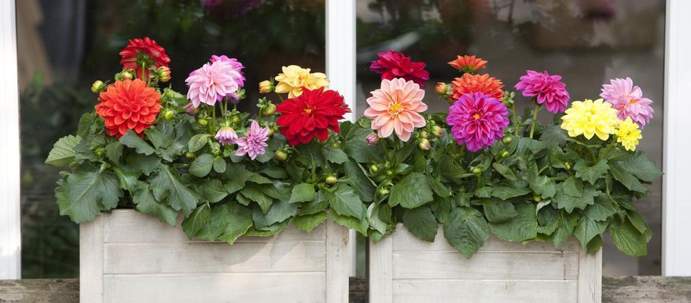 Najlepsze Kwiaty Na Balkon Gatunki Ktore Pasuja Do Kazdego Balkonu Urzadzamy Pl