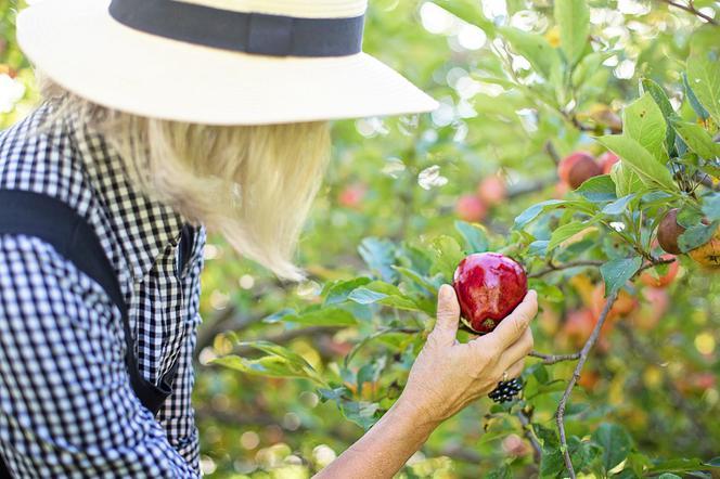 niesamowita cena Najnowsza jakość wykonania Sam sobie zbierz warzywa i owoce u rolnika - Super Express