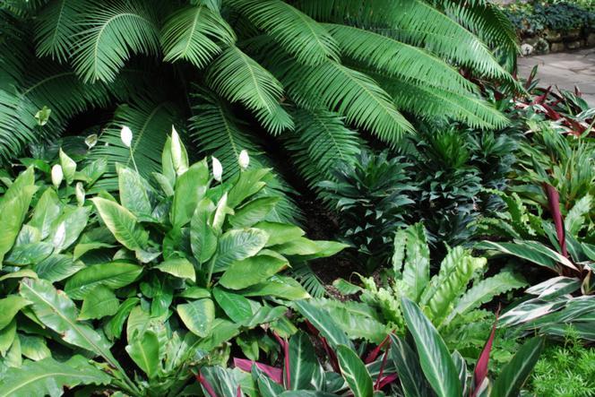 Jak Pielęgnować Rośliny W Ogrodzie Zimowym Muratorpl