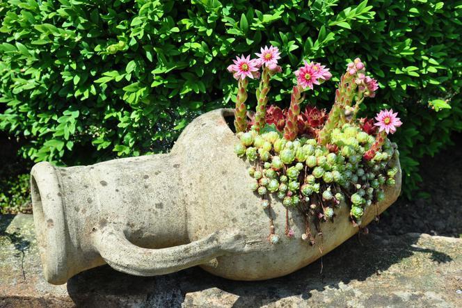 Rośliny W Nietypowych Pojemnikach Moda Na Donice Z