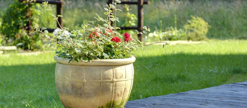 Ogród W Pojemnikach Jakie Rośliny Sadzić W Donicach Na Balkonie I