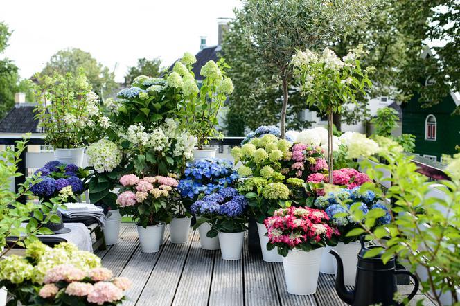 Kwiaty Na Balkon Wschodni Wybieramy Najlepsze Rosliny Na Balkon Wschodni Urzadzamy Pl