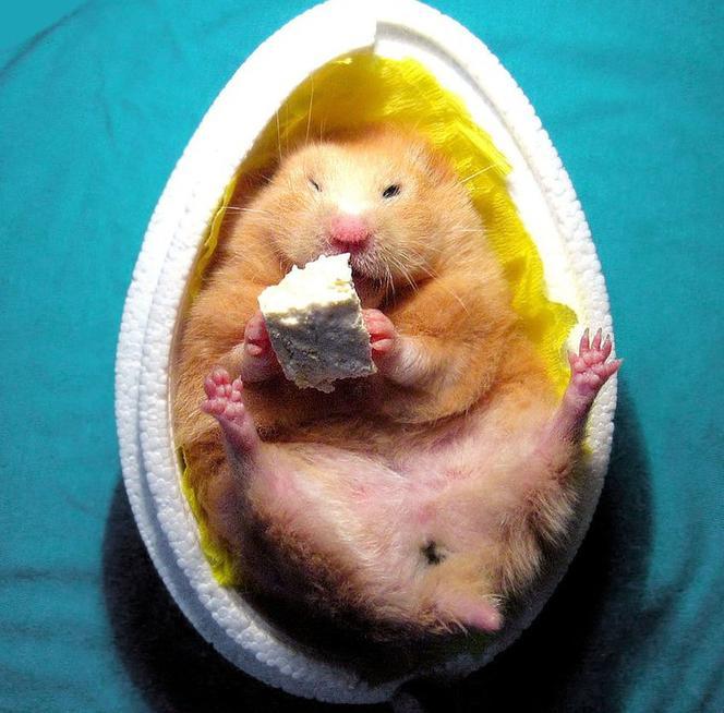 życzenia Wielkanocne Sms śmieszne Krótkie Poważne I