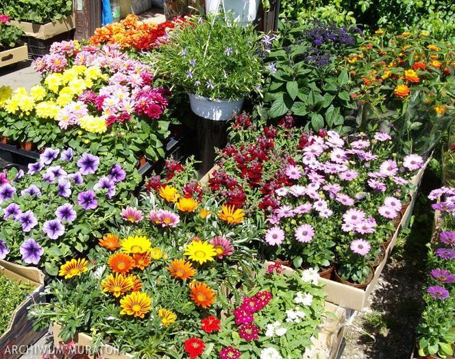 Jakie Kwiaty Balkonowe Sadzic Na Slonecznym A Jakie Na Zacienionym Balkonie Murator Pl
