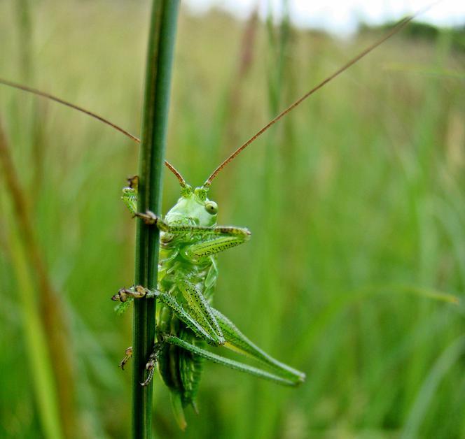 Japoński seks robaków