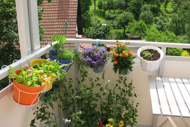 Doniczki I Inne Pojemniki Do Uprawy Roślin Na Balkonie I
