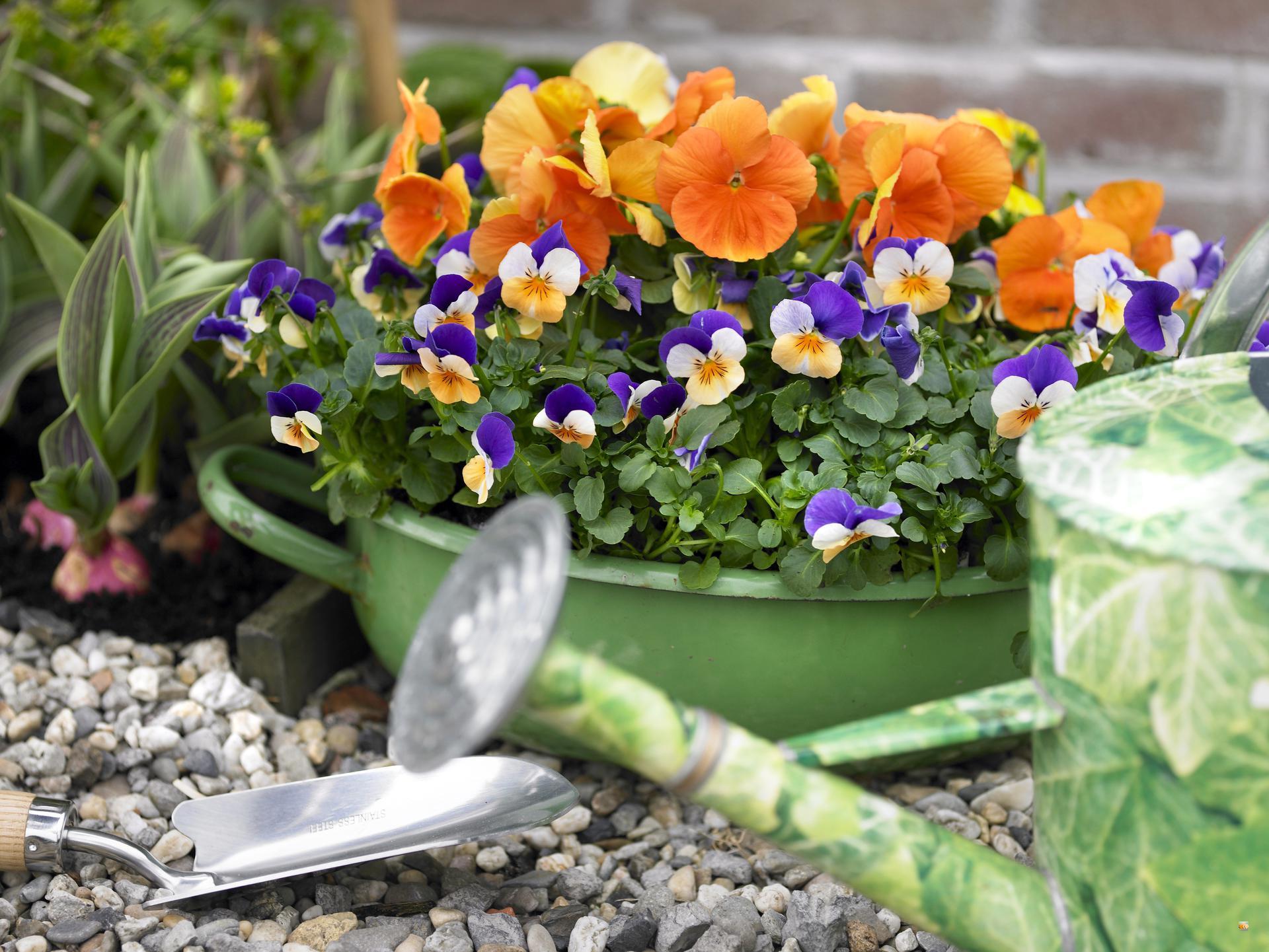 Kiedy Sadzic Kwiaty Na Balkonie Wiosenne Kwiaty Balkonowe Porady Inspiracje Wskazowki Urzadzamy Pl