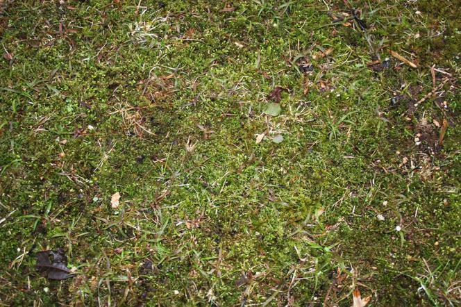 Jak Usunąć Mech Na Trawniku I Mech Z Kostki Brukowej