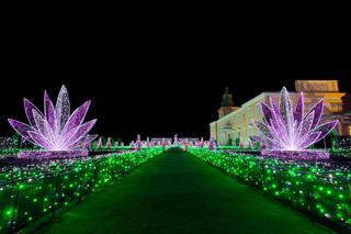Królewski Ogród światła 2019 W Wilanowie Bilety Godziny
