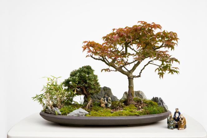 Drzewka Bonsai Jak Wybrać Doniczkę Do Bonsai Muratorpl
