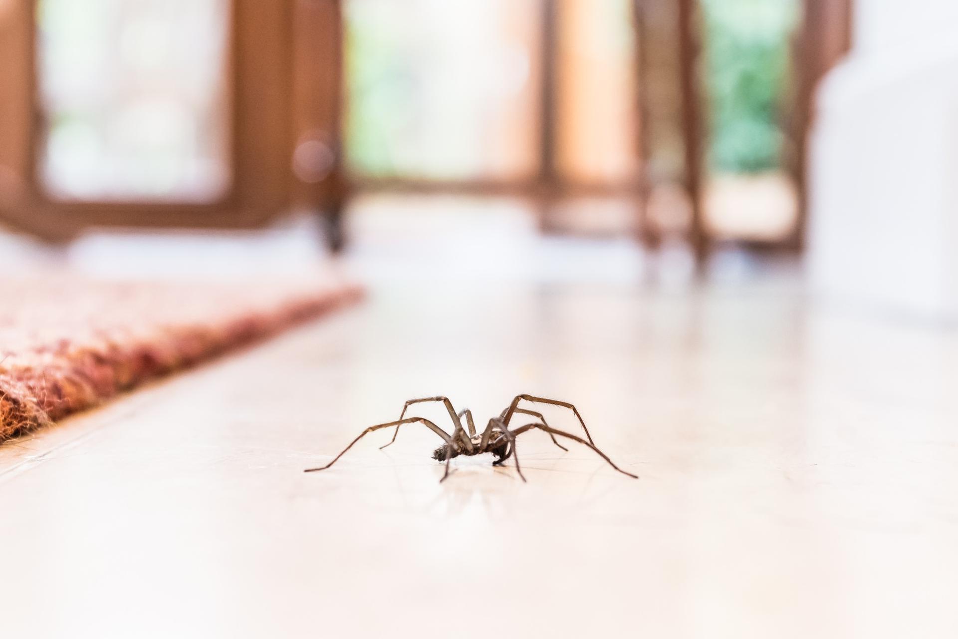 Znalezione obrazy dla zapytania sennik pająk
