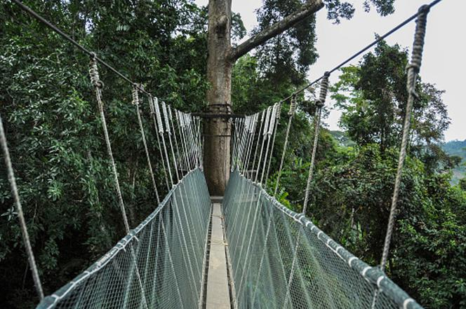 Most Canopy Walk