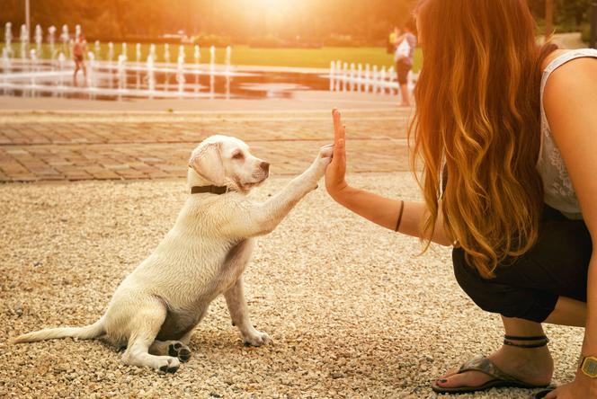 Wskazówki nauki i wychowania psa