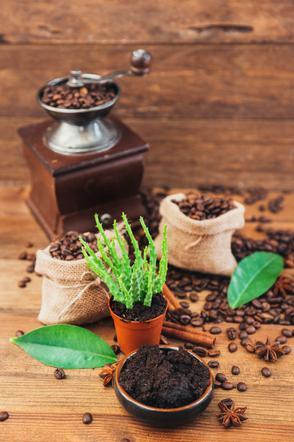 Fusy Z Kawy Jak Można Wykorzystać Fusy Z Kawy W Ogrodzie I
