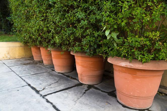 Donice Ceramiczne Do Domu I Ogrodu Zalety I Wady Donic
