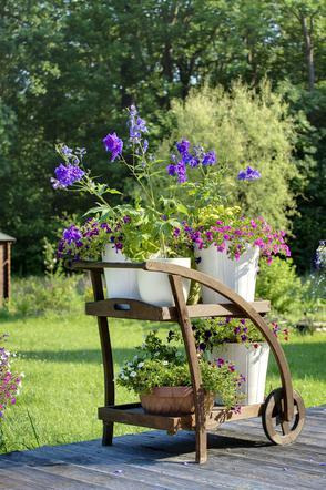 Ogród W Pojemnikach Jakie Rośliny Sadzić W Donicach Na