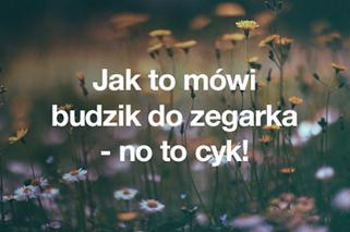 Warsaw Shore Najlepsze Teksty Ekipy Z Warszawy Prawdziwe