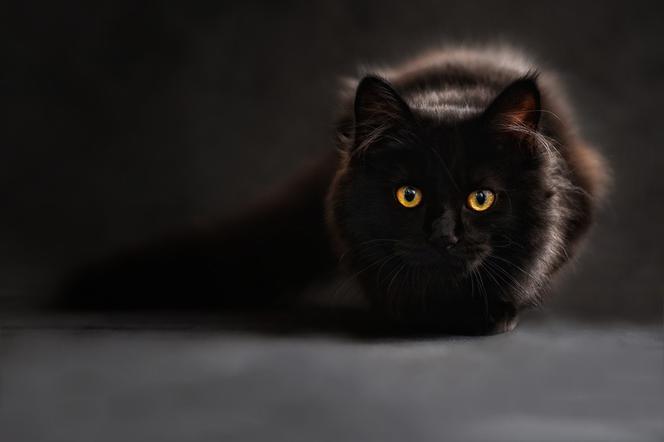 Zdjęcia czarnych kotów
