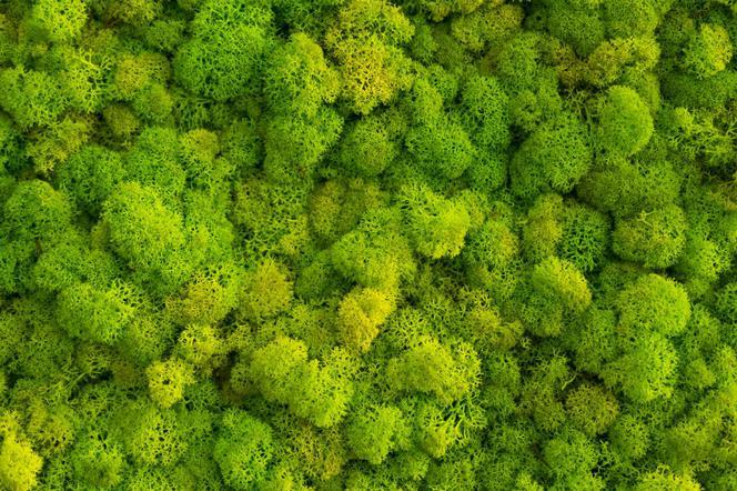 Mech Na Scianie W Domu Jak Zrobic I Pielegnowac Zielone Sciany Z