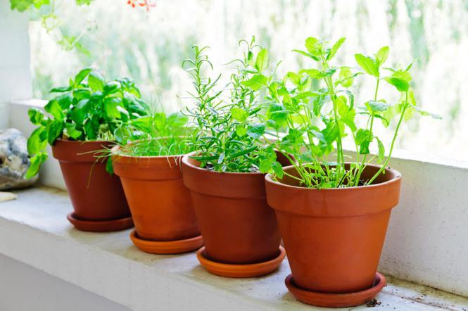Zimowy Ogródek Na Parapecie Okna Jak Uprawiać Zimą W Domu
