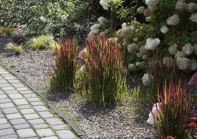 Jak Urządzić Ogród Przed Domem Pomysł I Aranżacje Przedogródka
