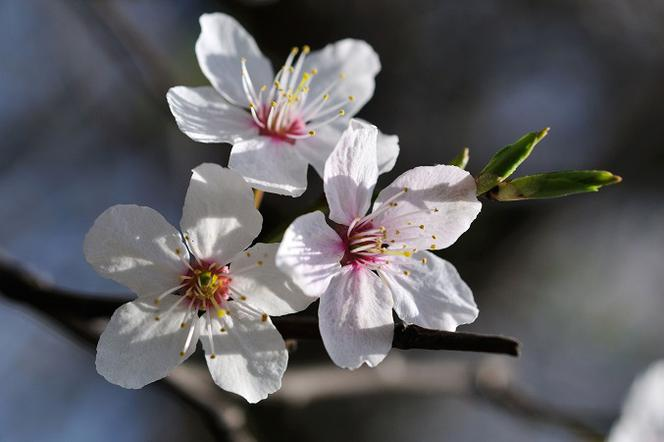 Równonoc wiosenna 2019 - kiedy jest pierwszy dzień astronomicznej wiosny?