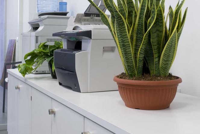 Zupełnie nowe Najlepsze kwiaty do biura. Rośliny doniczkowe w miejscu pracy KM64