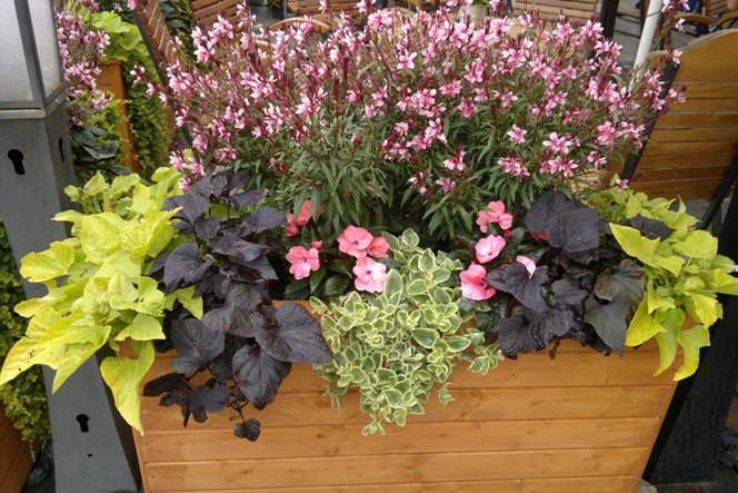 Kwiaty Na Balkon I Taras Ciekawe Kompozycje W Donicach I