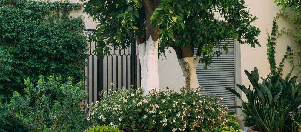 Drzewa Do Donic Na Taras I Balkon Jakie Drzewa Nadają Się