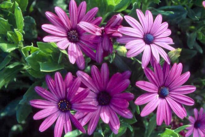 Kwiaty Balkonowe Jakie Rośliny Najlepiej Wybrać Na Balkon