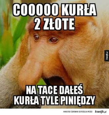Małpa Polak Jak Się Nazywa Co To Za Gatunek Eskapl