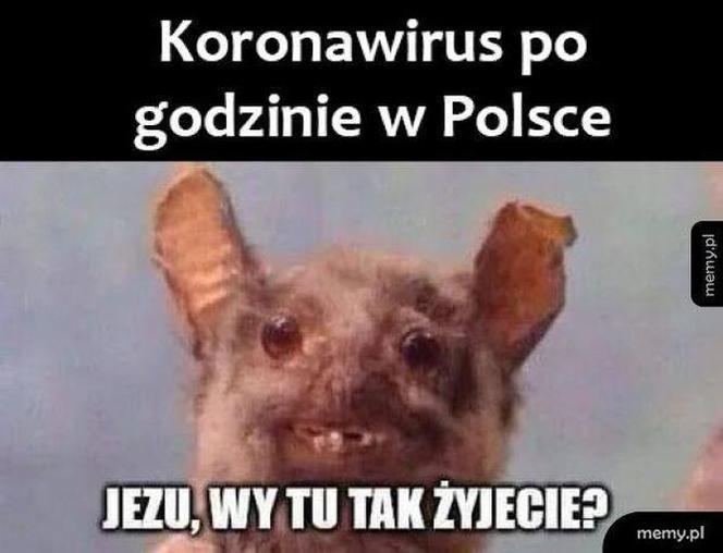 [Obrazek: gf-VUbD-tSCJ-oMEi_kronawirus-memy-niekto...nocrop.jpg]