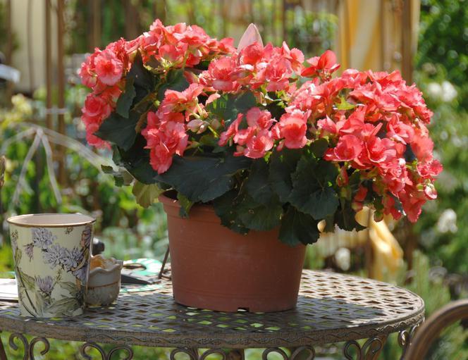 Kwiaty Doniczkowe W Stylu Retro Wybieramy Kwiaty Do