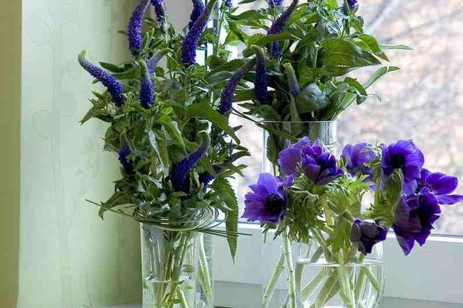Kwiaty Z Ogrodu Do Wazonu Co Zrobić żeby Kwiaty Długo