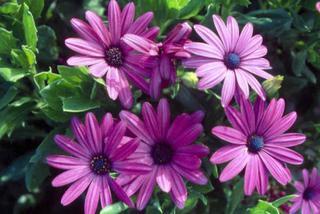 Kwiaty Balkonowe Jakie Rośliny Najlepiej Wybrać Na Balkon Muratorpl