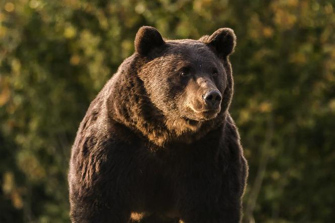Prințul Emmanuel von und din Liechtenstein a mituit și a împușcat cel mai mare urs din Europa