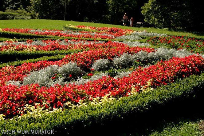 Rośliny Na Obwódki Jakie Kwiaty Na Obwódki Posadzić Wzdłuż