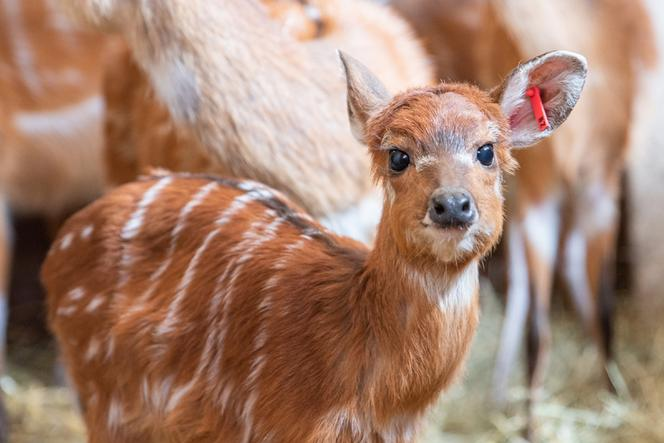 Baby boom la grădina zoologică din Wroclaw