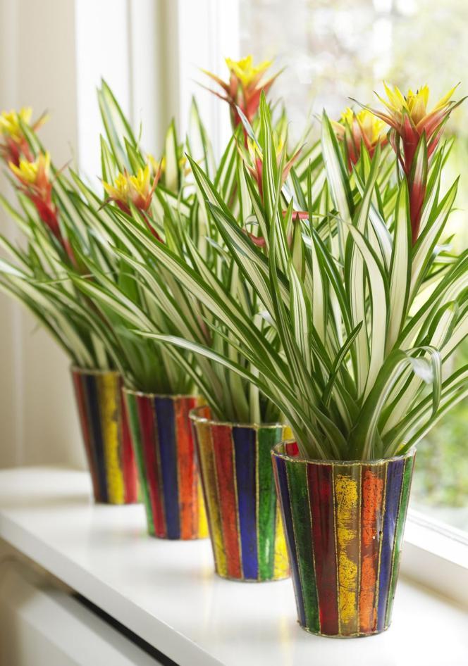 Kwiaty Domowe Na Parapet Kwiaty Doniczkowe Zielone I