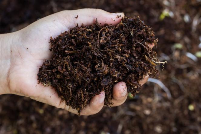 Czynniki kształtujące żyzność gleby