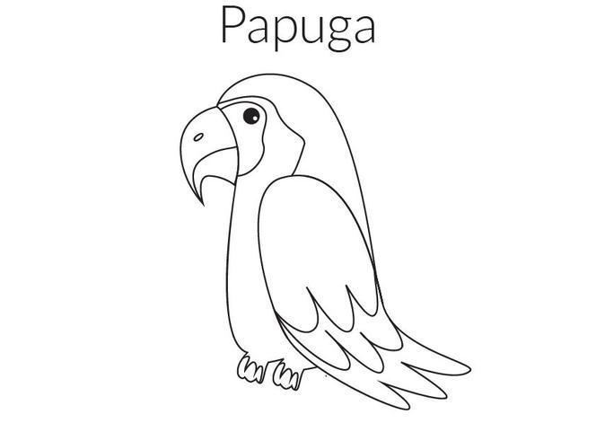 Papuga Kolorowanka Malowanka Do Druku Mjakmama Pl
