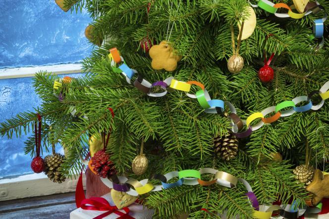 Choinka W Doniczce Na Boże Narodzenie Jak Wybrać I