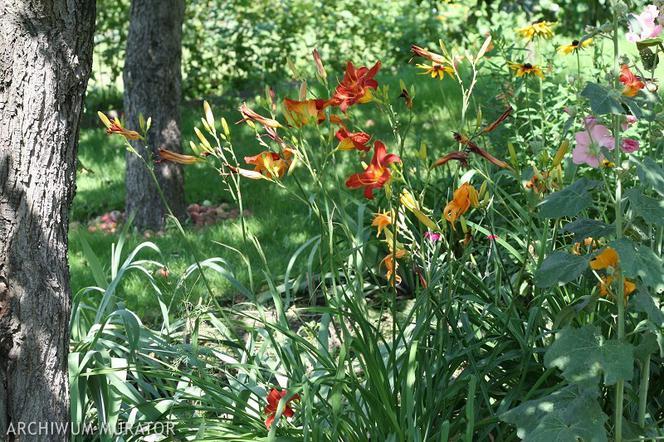 Wrzesień w ogrodzie: pielęgnacja roślin